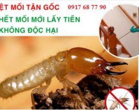 diet-moi-vung-tau-01_400x0-1