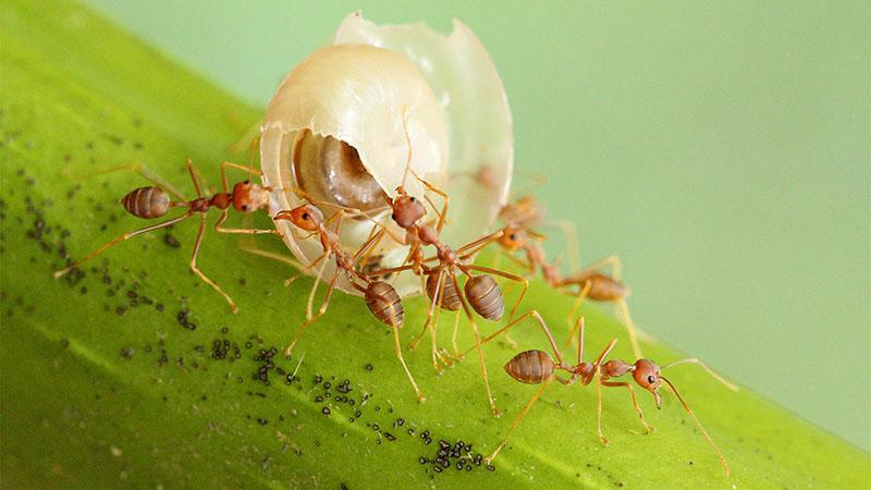 Loài kiến và những điều thú vị về kiến bạn không nên bỏ qua