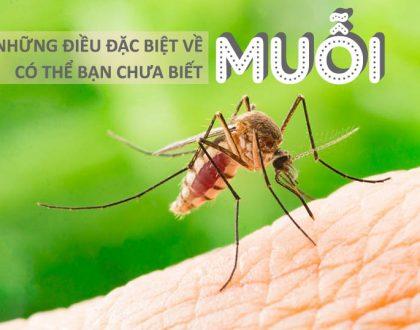 Loài muỗi và những điều đặc biệt về muỗi có thể bạn chưa biết