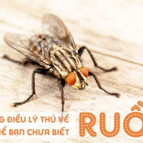 Loài ruồi và những điều lý thú có thể bạn chưa biết về ruồi